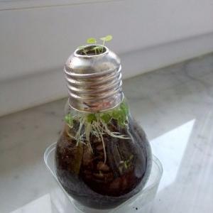 آموزش کاشت گیاه در لامپ